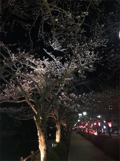 桜咲き始めましたね〜